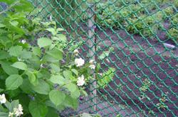 Декоративная садовая сетка решетка в рулонах для дачи